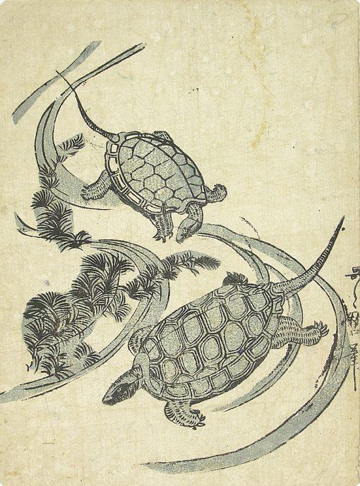 Two Turtles Swimming
