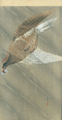 KOSON Eagle in Descent