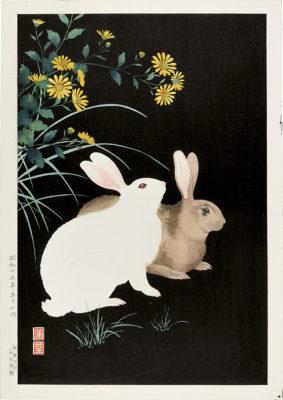 hodo rabbits