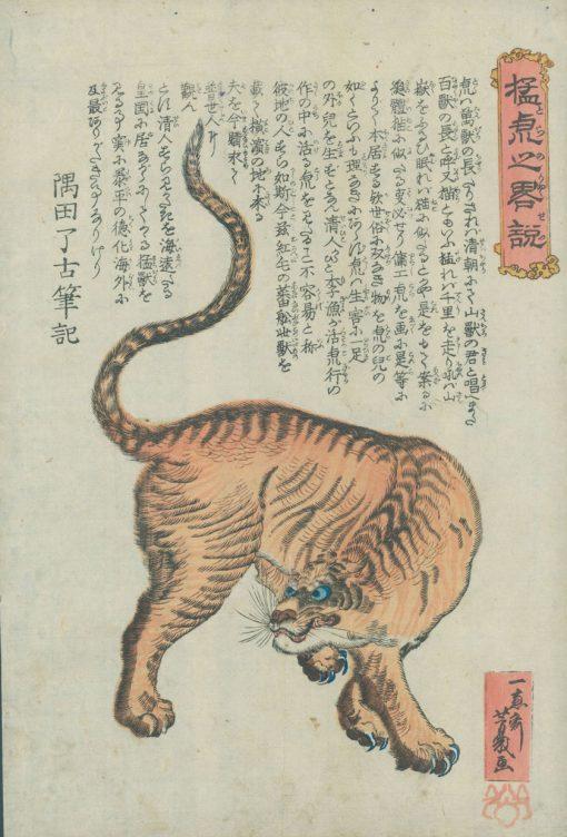 yoshikazu-tiger