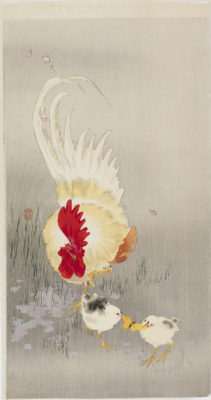 Koson Rooster and chicks