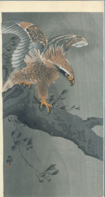 KOSON Hawk in Rain